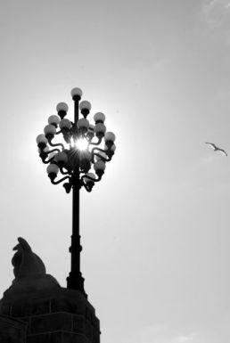 A bird flies in the sunlight around a lamp post near the Chestnut St. Bridge to 30th Street Station, Philadelphia.