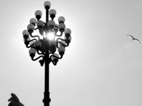 A bird flies in the sunlight around a lamp post near the Chestnut St. Bridge to 30th Street Station, Philadelphia.