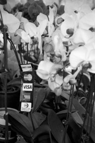 You have no excuse not to buy a flower. Damnit. (Unfortunately they don't take diamond dollars)