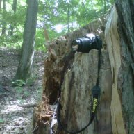 Nature always provides. Who needs a tripod when you have a tree stump?