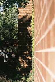 Vines, with no where else to go, climb up brick walls.