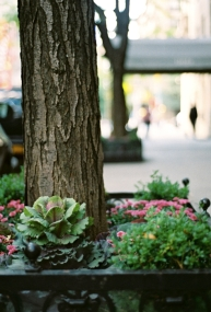 Is this tree supposed to be caged in? Are these colorful plants supposed to grow on New York sidewalks?