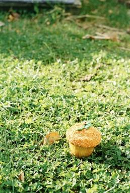 Pumpkin patch? I wish!