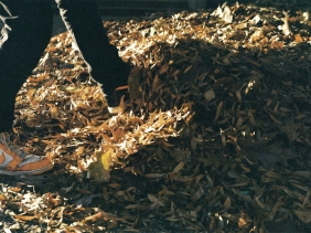 Kyle Psulkowski feels the need to play in a pile of leaves. As long as I have my camera, I'm all for it.