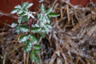 Snow lightly brushes the plants that are still alive in late November in Northeast Pennsylvania this Thanksgiving Day.