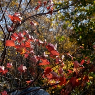 A closer look at some bright red leaves.