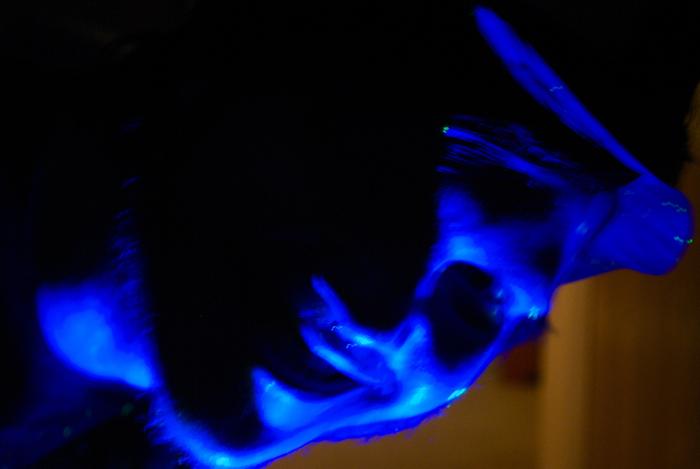 Kyle Psulkowski's evil grin looks even more threatening in this eerie light.