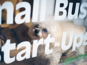 An angry puppy barks, but I can't hear him through the Helvetica covered window.
