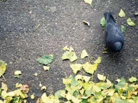 I really wanted to kick this pigeon. I can't explain why. I'm not a terrible person, honest.