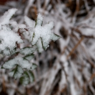 An unrecognizable heap of snow cover plants remains in my backyard.