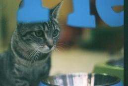 Indoor cat almost outdoors.