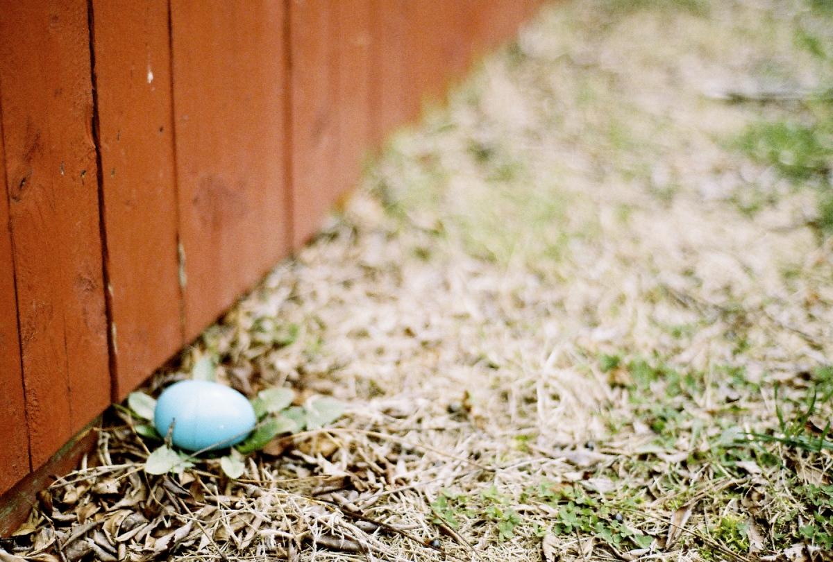 An Easter egg hunt for the kids.