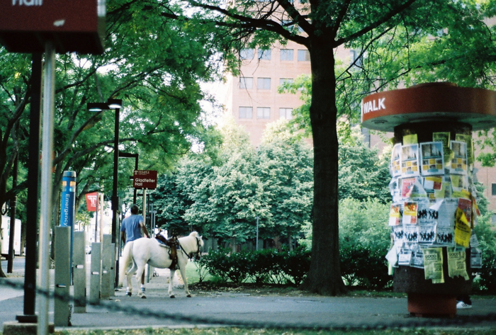 Taking the small horse to the Gladfelter lawn to graze....