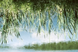 Grass and water.