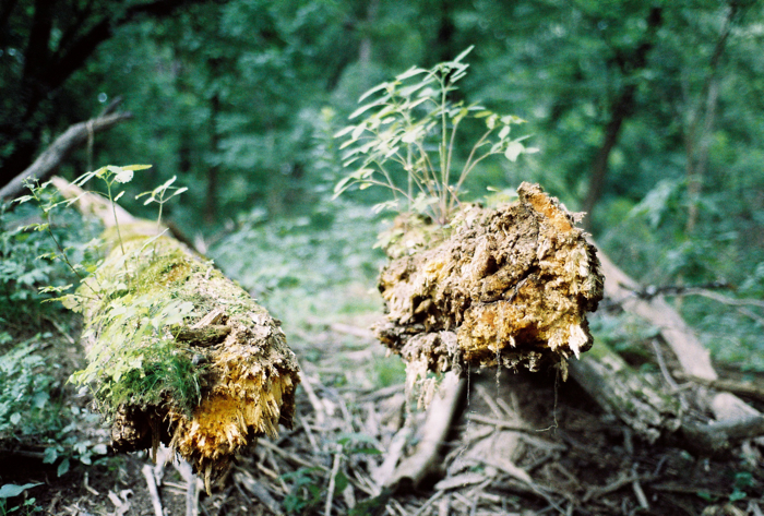 Uprooted.
