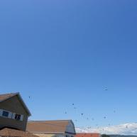 Birds flock.