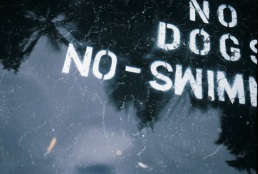 No dogs swimming.