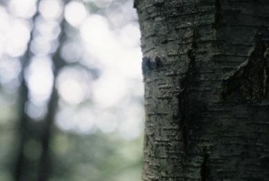 Tree life.