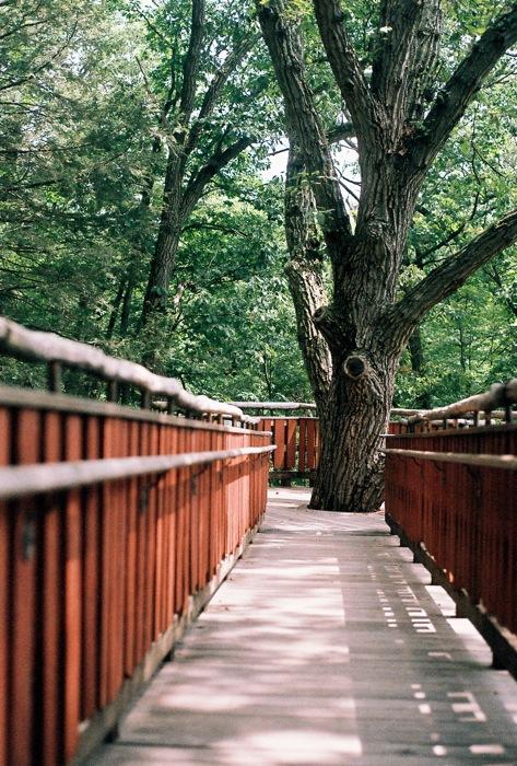 True life, I have a tree life.