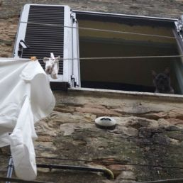 A cat looks out the window as laundry dries, swinging in the breeze of the mountains of Umbria.
