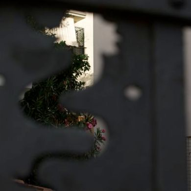 Flowers in a resident's yard through a seahorse.