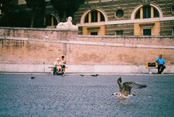Seaguls and pigeons seem to be the only birds found in Rome, especially at Piazza del Popolo.