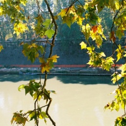 Heavy afternoon sun on the Tiber.