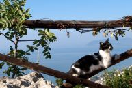 A cat overlooks the bay of Terracina, located between Naples and Rome.