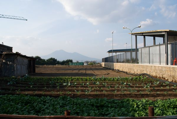 Mt. Vesuvius as seen from a farm in Stabiae.