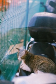 Vespa Kitty.