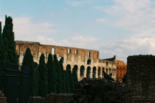 Pigeons & the Colosseum