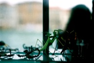 Praying mantis! (and teeny tiny glass ants that were 3 euro each!)
