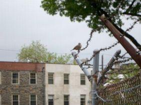 Bye bye birdie, hello storm.