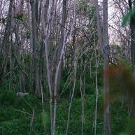 Overgrowth & death.