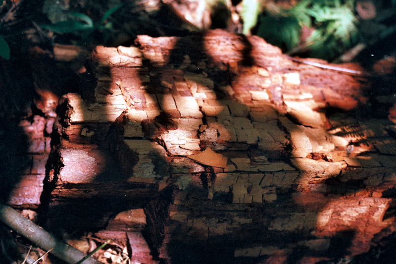 Red wood, but not redwoods.