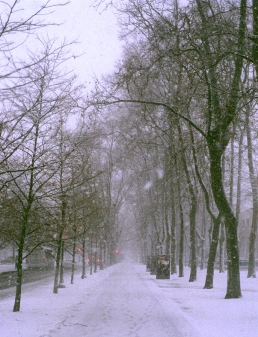 Snow laden, tree lined parkway.