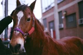 Smokey, 13th Street's sweetheart.