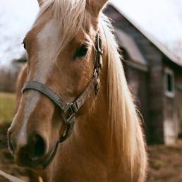 Hello, pretty horse!