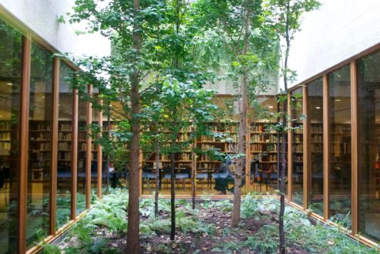 Garden in a library.