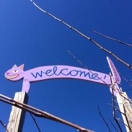 Welcome, cats of Kensington!