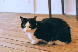 Moma, the gallery cat at Larry Becker.