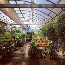 Dundee Gardens' greenhouse.