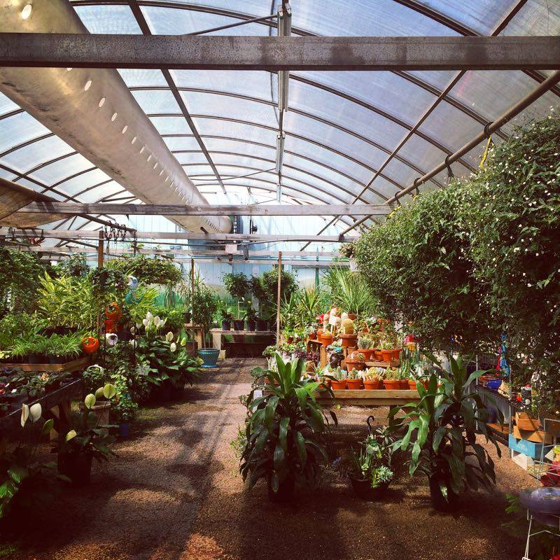 Dundee Gardens' greenhouse.