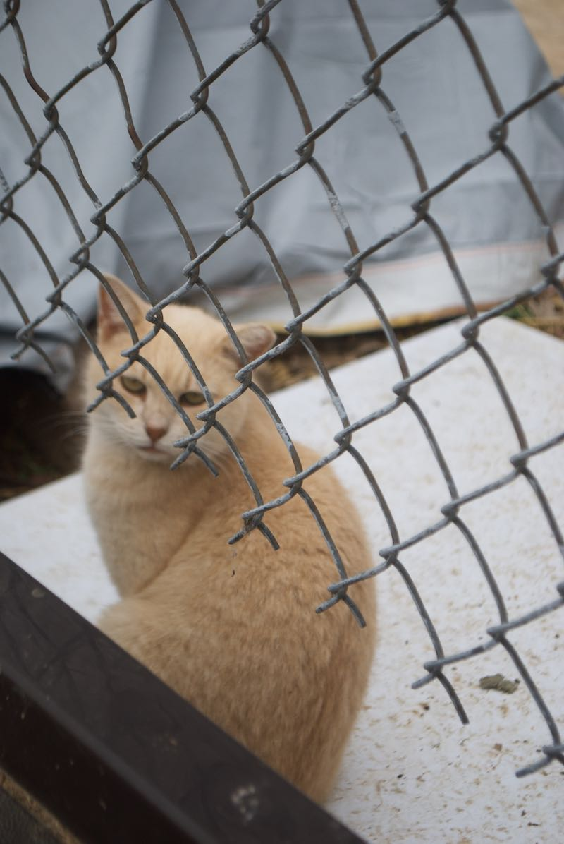 Don't forget about the ferrel cats of South Philly!
